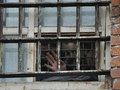 К чему приведет массовая амнистия российских заключенных?